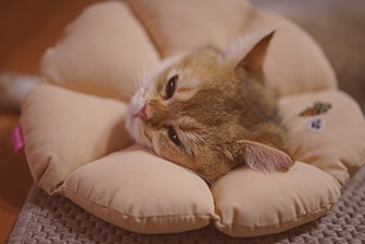 Chat coussin