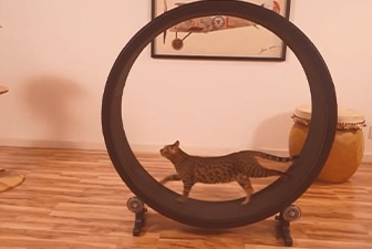 Chat roue