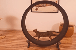 Roue chat
